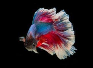 Ryby jako pierwsze uprawiały seks